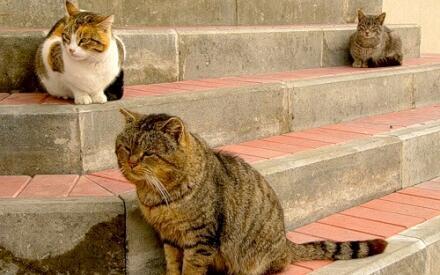 Животные сами поделят территорию и социальные роли
