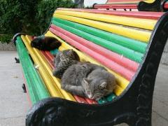 Сколько котов нужно для счастья вам?