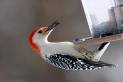 Как сделать кормушку для птиц?