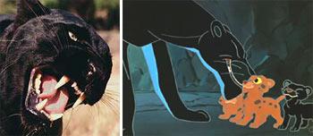 У черной пантеры рождаются и пятнистые детеныши.