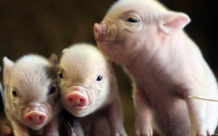 Фотография с корпоративного сайта PennyWell Farm (www.pennywellfarm.co.uk)