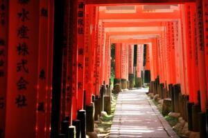 Тории, коридор на протяжении всего пути к храму