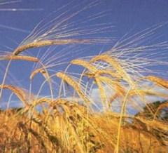 Как восстановить сельское хозяйство России?