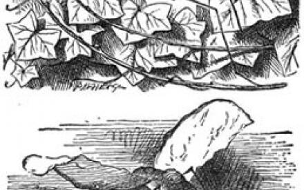 Эти иллюстрации Тенниела отсутствуют во всех русских изданиях, потому что адекватно перевести названия зазеркальных насекомых не смог никто.