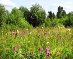 Какие лекарственные растения собирают в июле?