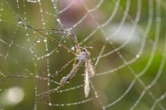 (Фото: siloto, Shutterstock)