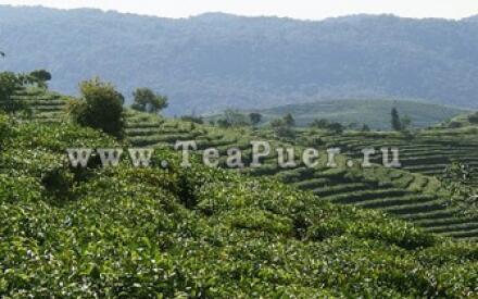 Чайные плантации южно-китайской провинции Юньнань.