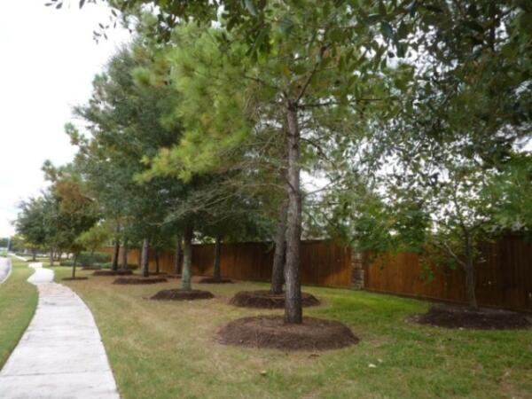 Осенью и весной приствольные круги на улице подсыпают удобренной землей.