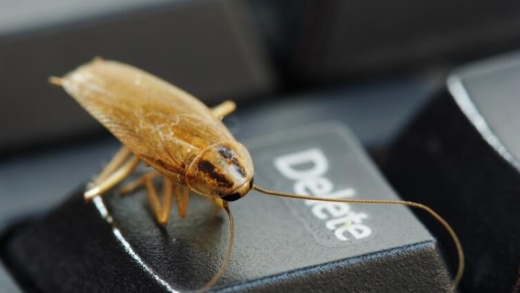 Как избавиться от тараканов, клопов и муравьёв?