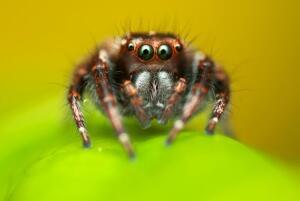 (Фото: Fong Kam Yee, Shutterstock.com)