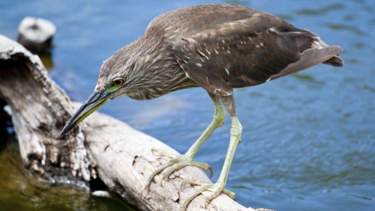 Гонолулу, Гавайи: к птицам не приставать!
