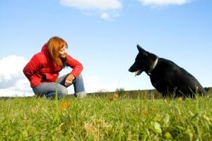 Дрессировка: может ли она быть интересна и хозяину, и собаке?