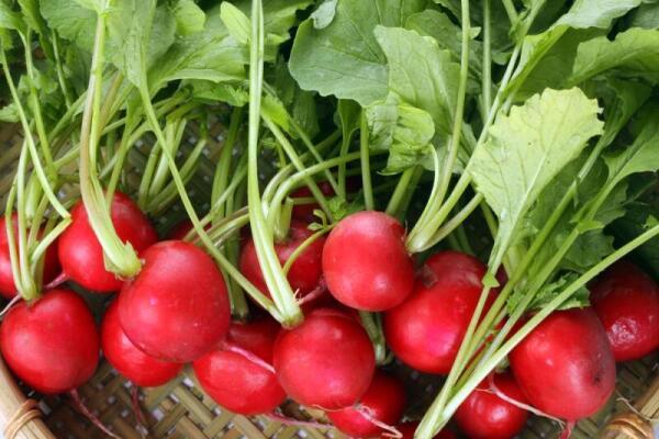 Приусадебный участок выращивание овощей