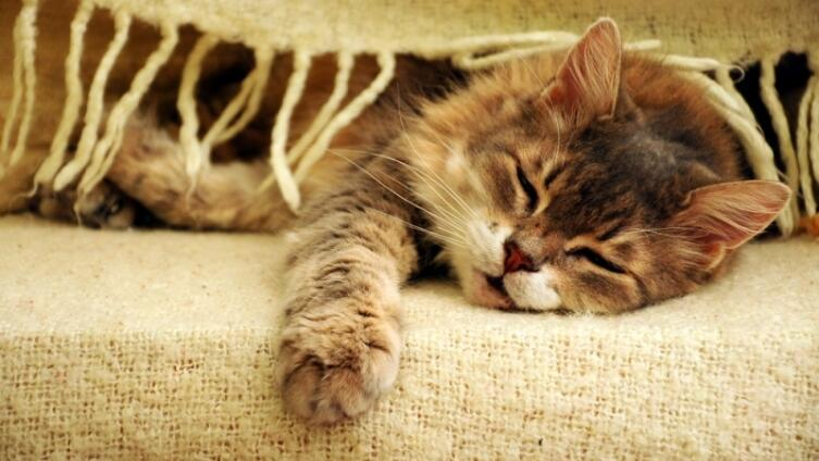 Хотите завести дома кошку? Личный опыт. Часть 2