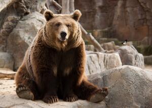 Короткий тест. Каково настоящее имя медведя?