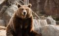 Каково настоящее имя медведя?