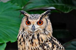 Знаете ли вы мир птиц?