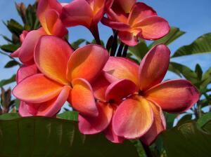 Сможете ли вы узнать цветок?