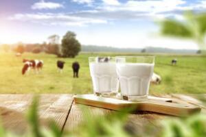 Хотите молока? Тест о молочных продуктах