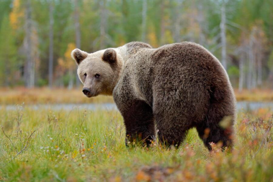 Что вы знаете о хозяине леса и его родственниках?