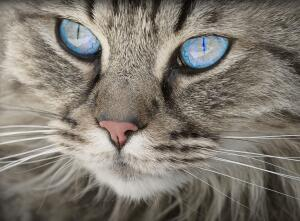 Кис-кис, мяу… Всё ли вы знаете о кошках?