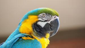 Что вы за птица? Психологический тест