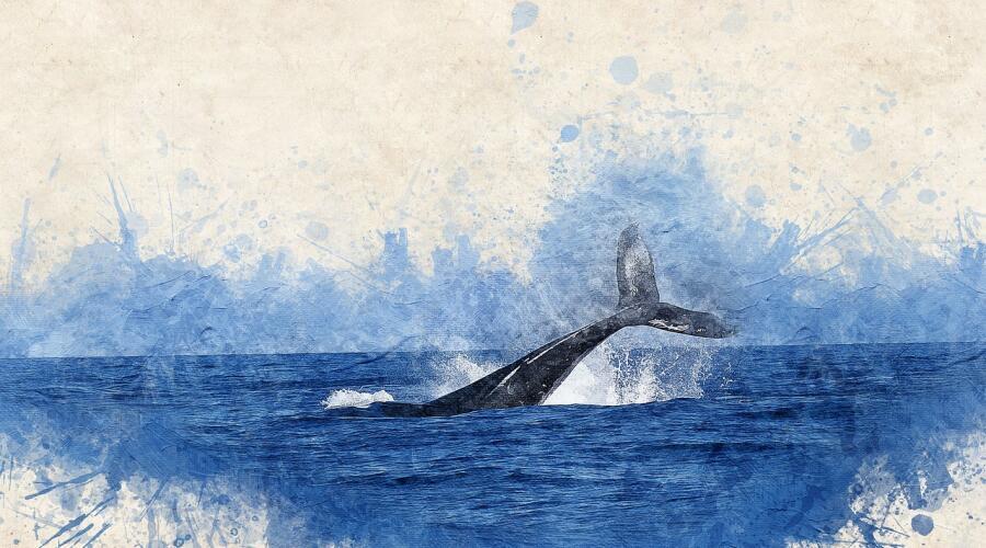 Тест про китов. Что вы знаете о самых больших животных планеты?